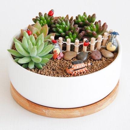 多肉套装组合盆栽套餐 组合盆栽多肉植物盆栽办公室桌面