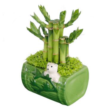 小型可爱植物熊猫开运竹塔办公桌盆栽绿植花卉