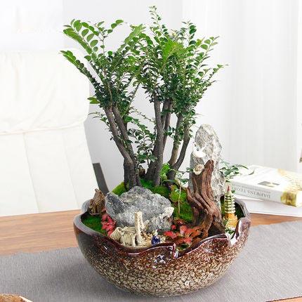 紫檀盆栽小叶紫檀木树桩盆景客厅室内办公桌面提神绿植