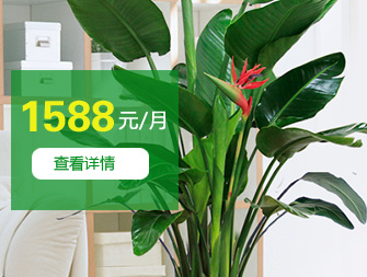 ¥1588/月