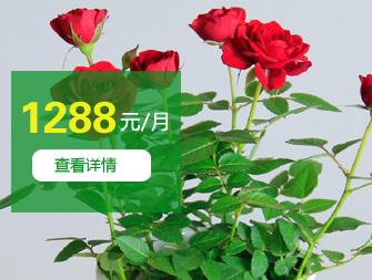 ¥1288/月