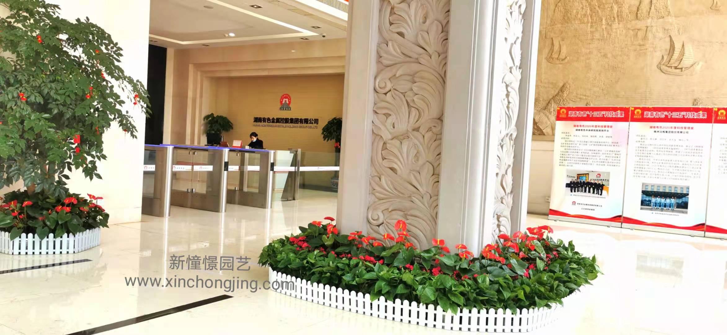 长沙花卉租摆——绿植租摆-办公楼摆花-公司总部摆花-五矿有色集团