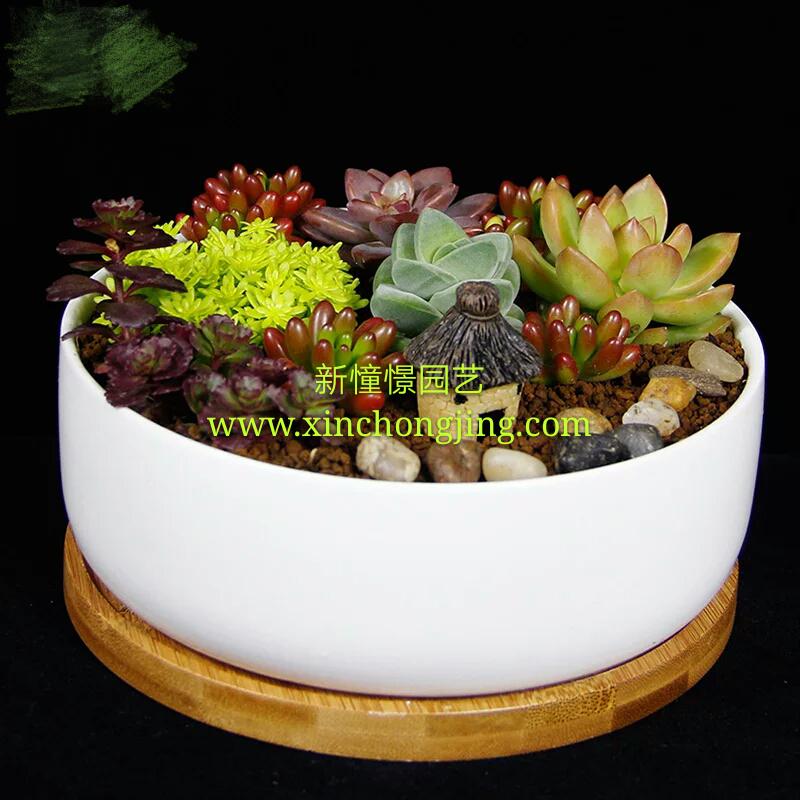 多肉盆栽趣味桌面盆景迷你防辐射净化空气精美瓷盆组合植物